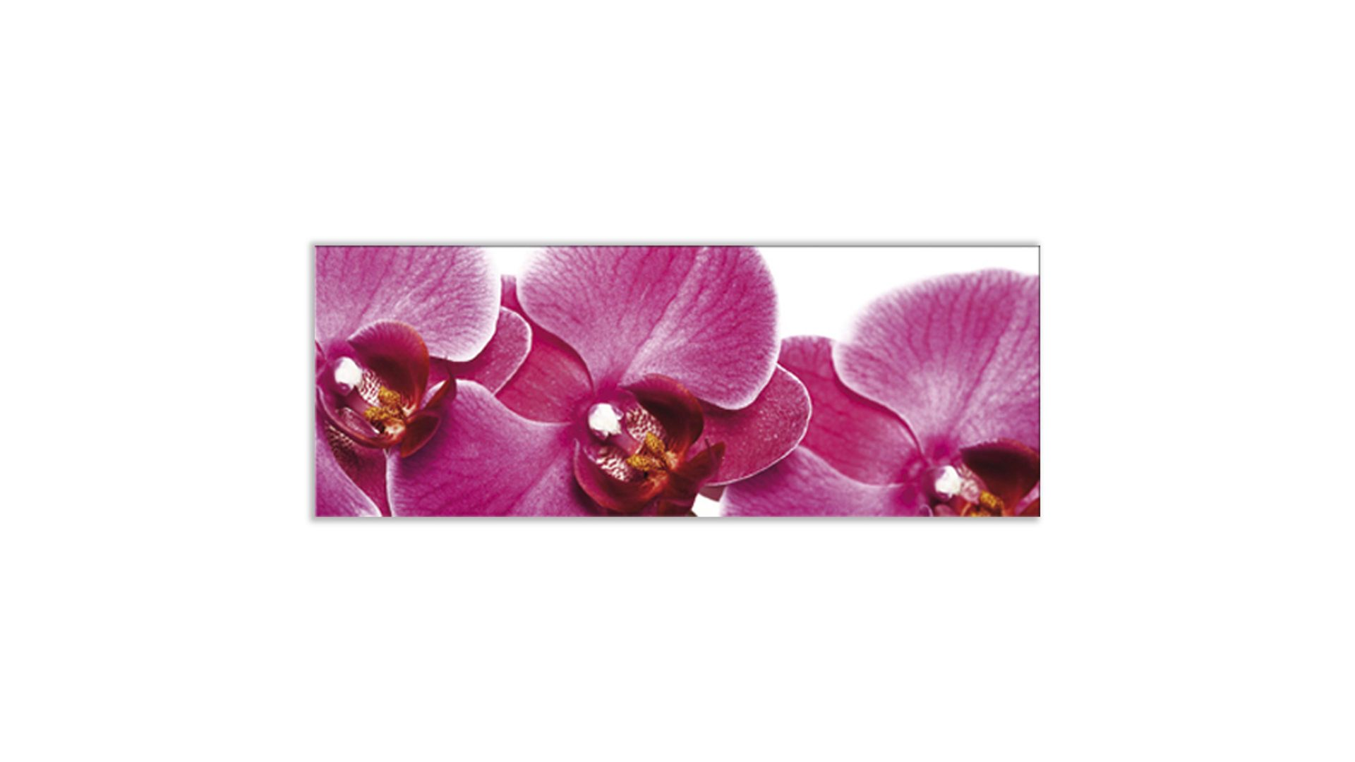 Glasbild Ars graphica aus Glas in Pink Glasbild Pink Orchidee 4 mm Floatglas mit Motiv, ca. 80 x 30 cm